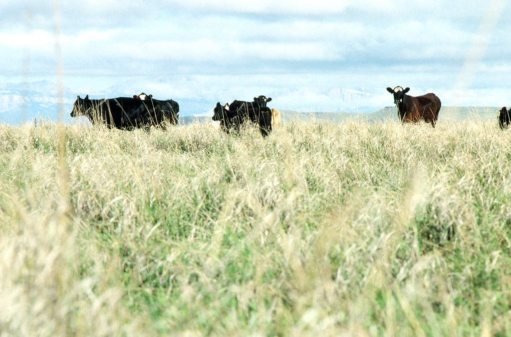 Pasture-Raised Beef is a Climate Change Solution